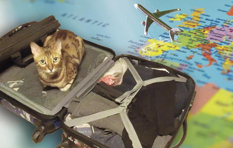 """Результат пошуку зображень за запитом """"Путешествие с домашней кошкой"""""""